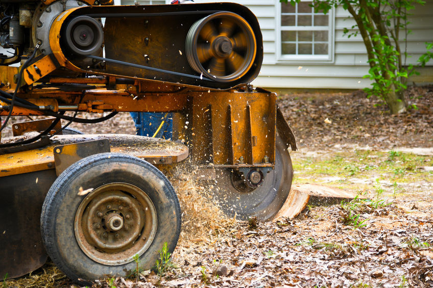 Stump grinder background for tree service in Gulfport Mississippi